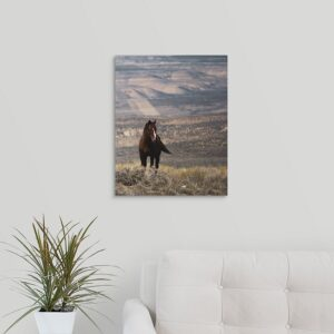 Shop Wyoming 16×20 Wild Horse Photo Acrylic Print
