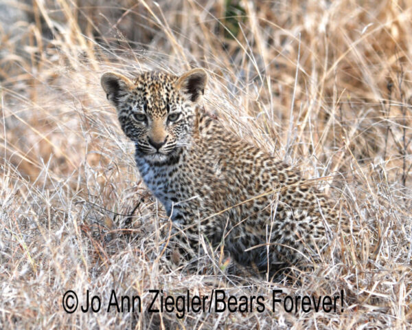 Shop Wyoming African Critters Photography Prints 5×7