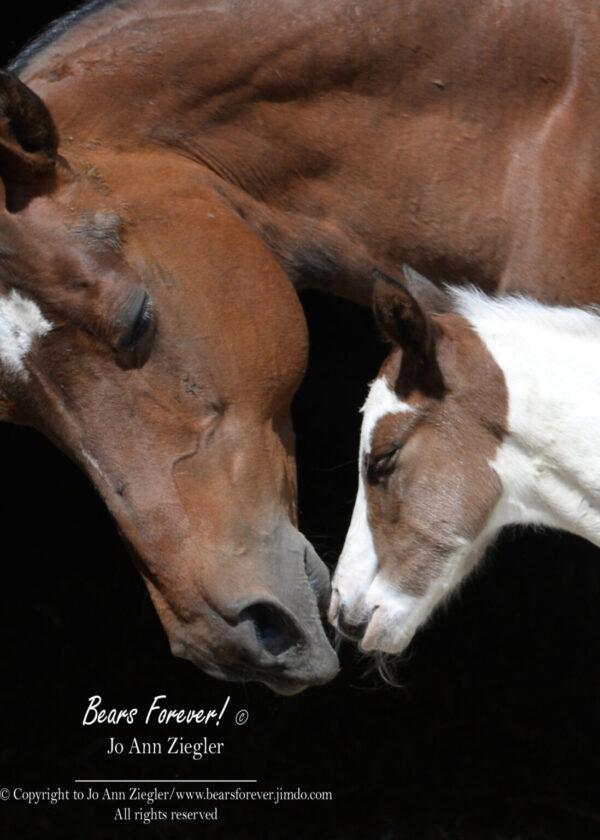 Shop Wyoming Fox & Horse Photography Prints 5X7