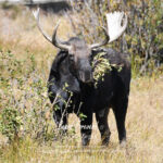 Shop Wyoming North American Grazers Photography Prints 8×10