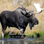Shop Wyoming North American Grazers Photography Prints 5X7