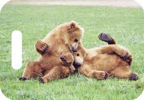 Shop Wyoming Brown Bear Luggage ID Tags