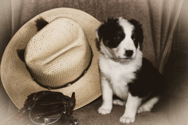 Shop Wyoming Everything Border Collie (12 photo cards)