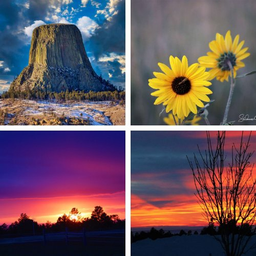Shop Wyoming Coasters (set of four)
