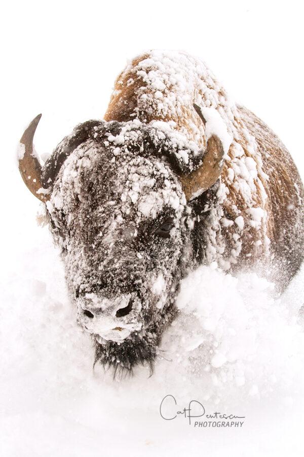 Shop Wyoming PERSEVERANCE – Photographic Art Prints