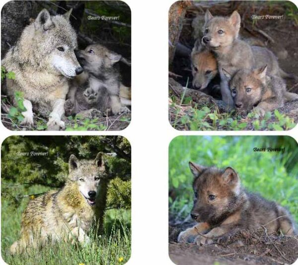 Shop Wyoming Sets of Four Wildlife Photography Coasters