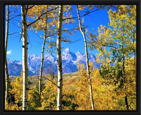 Shop Wyoming 16×20 Framed Grand Teton Canvas