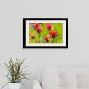 Shop Wyoming Framed 16×24 Indian Paintbrush Print