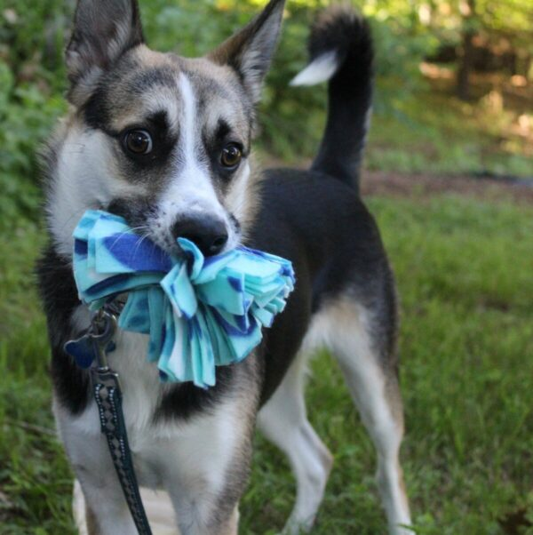 Shop Wyoming Snuffle Ball Soft Handmade Fleece Dog Toys – Small – 4 inch