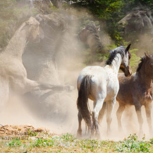 Shop Wyoming THE BATTLE – Photographic Art Prints