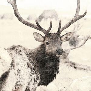 Shop Wyoming WILD WINTER – Photographic Art Prints