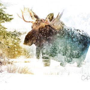 Shop Wyoming WINTER WALK – Photographic Art Prints